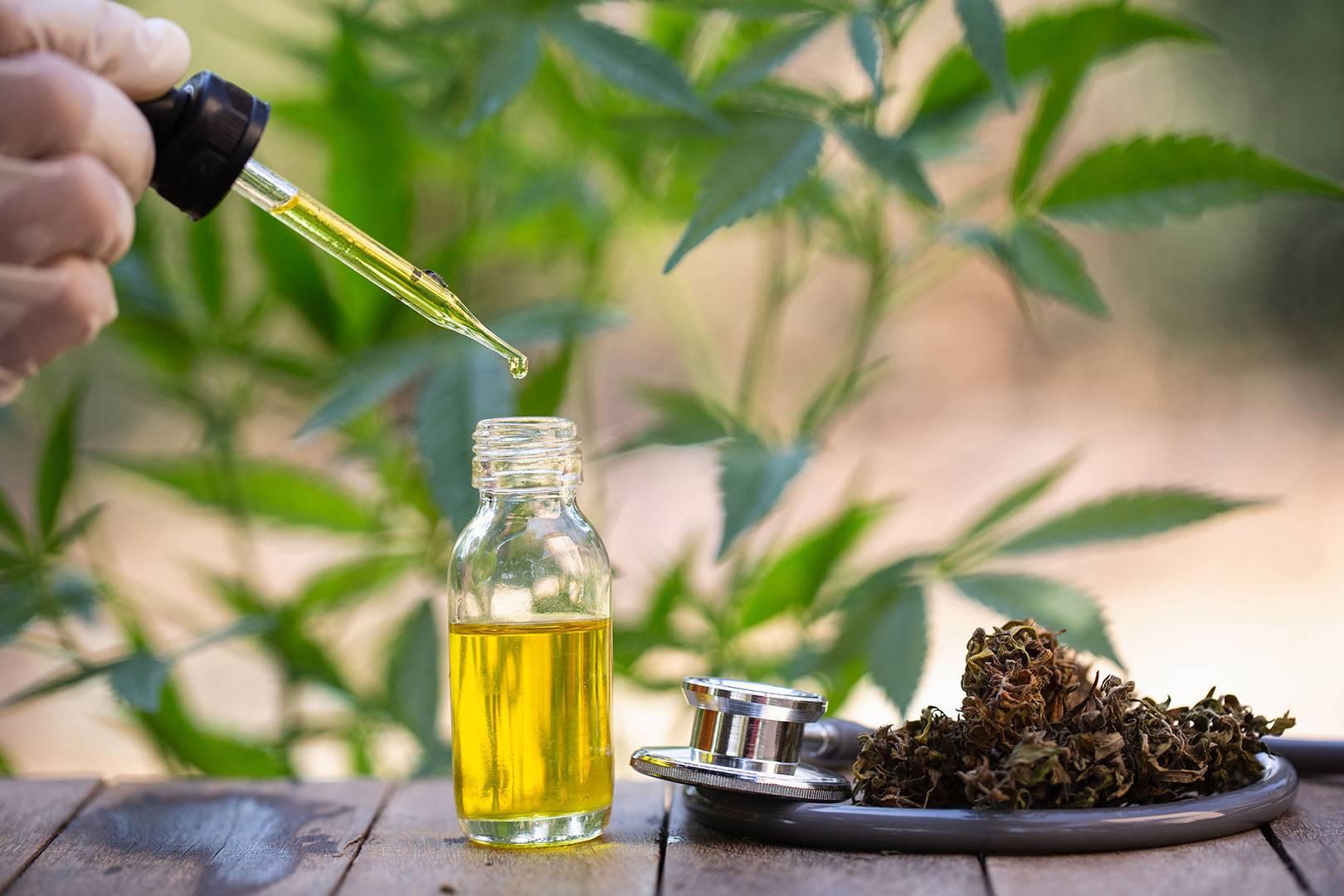 Potrzeba Stosowania Marihuany Medycznej, NasionkaCannabis